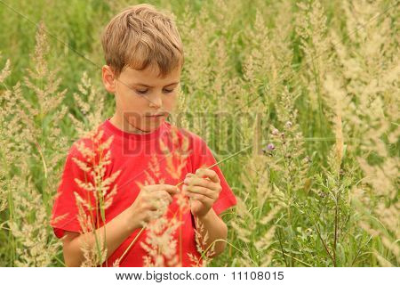 Little Boy In Red Shirt Stands In High Green Grass And Holding Blade Of Grass