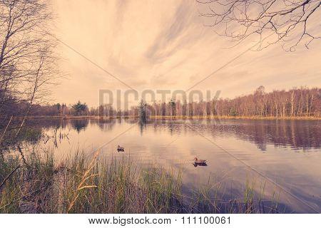 Idyllic Lake Scenery With Lure Ducks