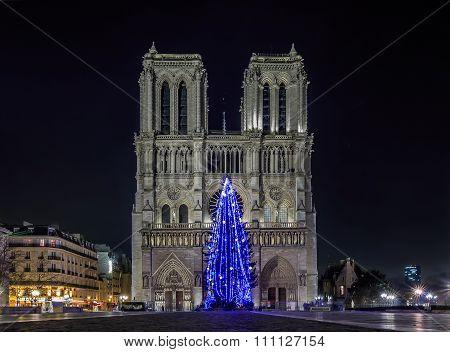 Christmas Tree At Notre Dame De Paris
