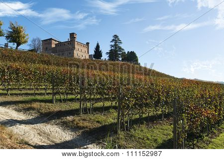 View Of Autumn The Langhe Unesco Heritage