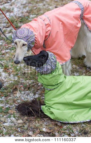 Two Dogs In Winter Costumes