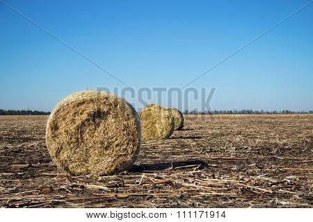 Roll Of Hay On Field