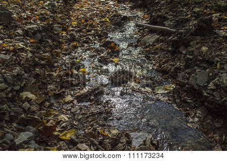 Forest Stream And The Fallen-down Autumn Leaves