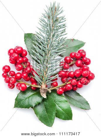 European Holly and fur-tree branch on white background.