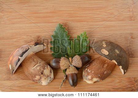 Forest Arrangement