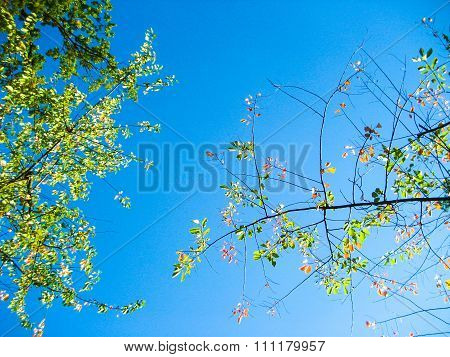 Blue sky with tree branches and leaves residues on them