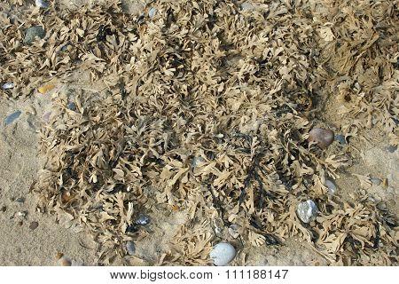 Seaweed on strandline