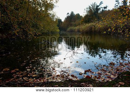Autumn Fall Leaves On The Water