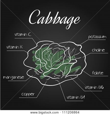 Vector Illustration Of Nutrients List For Cabbage On Chalkboard Backdrop