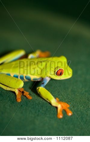 Red-Eyed Frog