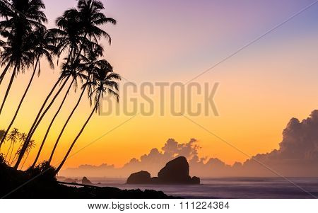 Sunrise At The Beach With Palm Trees