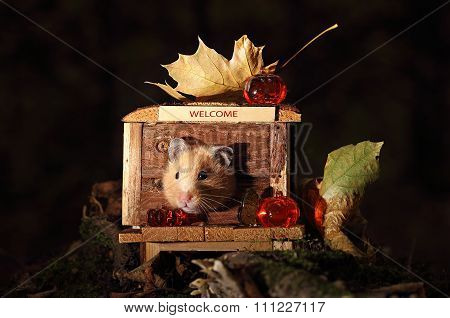 Hamster Celebrating Halloween.