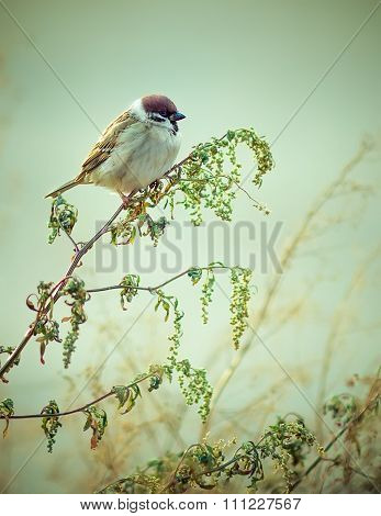 Wild Eurasian Sparrow Bird Sitting on Wood Branch Bright Colorfu