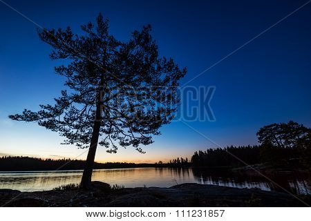 Lonely tree by forest lake