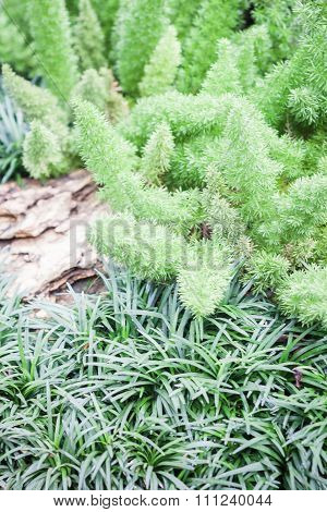 Green Plant Decorated In Home Garden