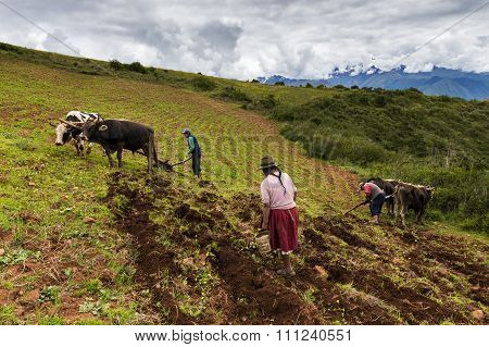 Peruvian family plowing the land near Maras, Peru