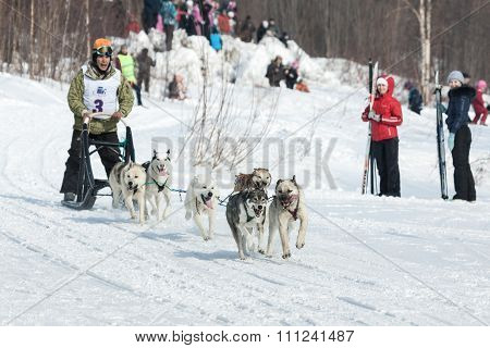 Musher Runs Dogsled On Snowy Track