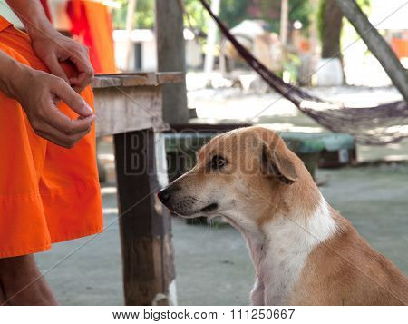 Faithful Dog , A Faithful Friend And Slave Owners,