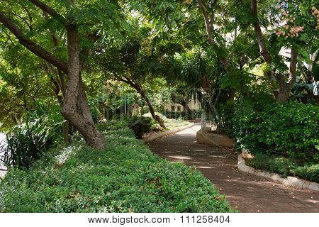 Lush Green City Park