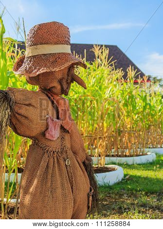 Scarecrow In Corn Farm