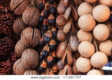 Dry Pine Cones And Other Seeds