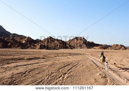 Desert trail in the Sinai desert