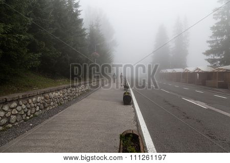 Foggy Day In Coniferous Forest.