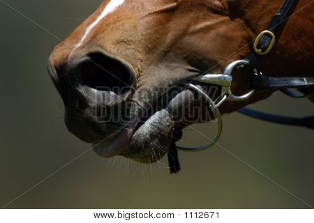 Horses Mouth 001