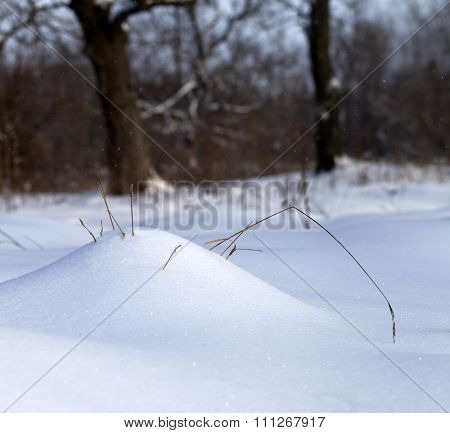 Sunlight Snow Drift And Dry Grass In Winter Forest
