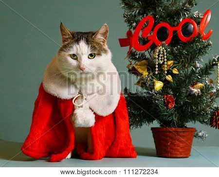 Cool Tom Cat In Santa Claus Garment Mantel
