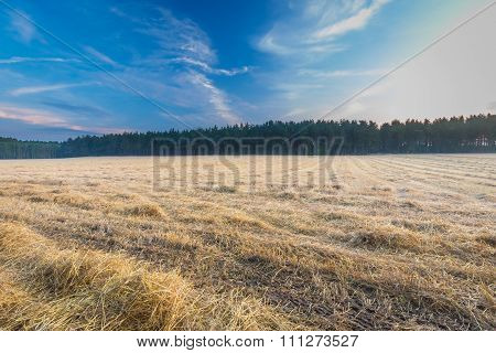 Stubble Field At Summer Morning