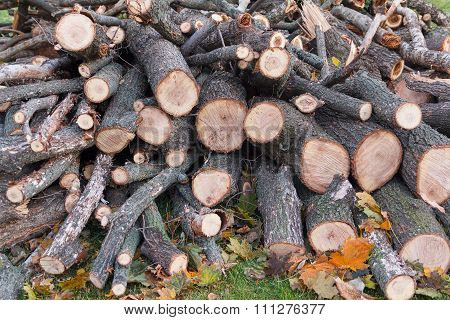Pile Of Firewood Stacked On The Grass