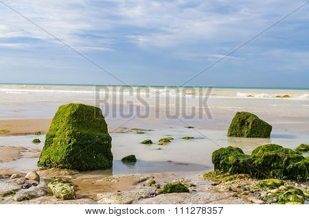 Stones Covered By Algae Lying On The Seashore, Cote D'opale, France