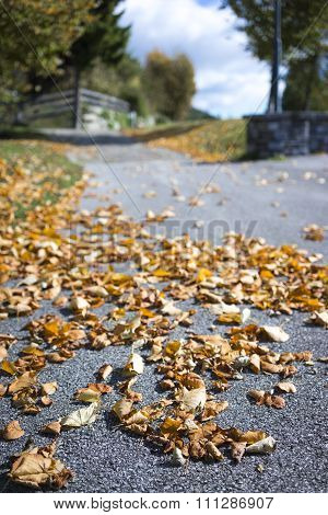 Dried Brown Autumn Leaves At The Side Of A Road
