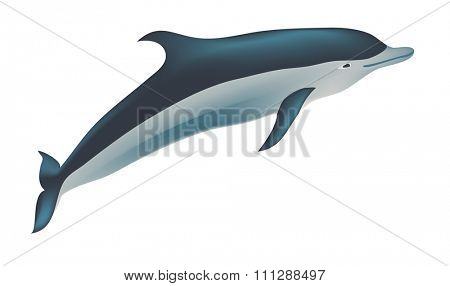 Dolphin illustration, isolated on white