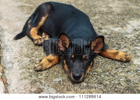 Black Dog Waiting For The Owner To Get Away With Loneliness
