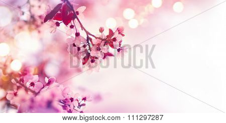 Spring blossom border or background art with pink blooming tree. Beautiful nature scene with flowers on tree and sun flare. Sunny day. Beautiful Orchard. Abstract blurred background. Springtime