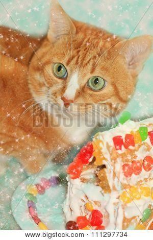 Ginger Cat With Gingerbread House