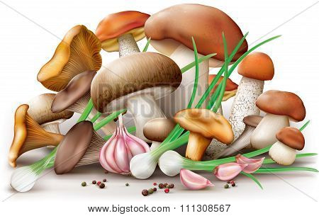 Different Edible Mushrooms