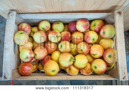 Box With Heap Of Jonagold Apples