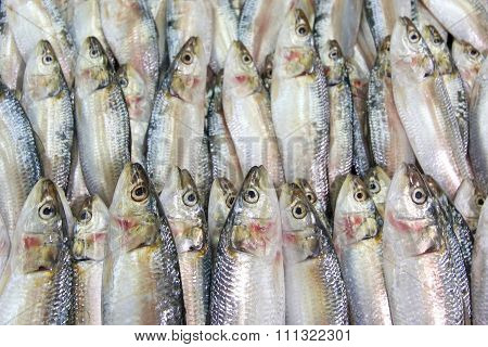 Fresh Sardines On The Market