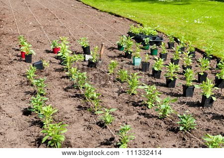Cultivated young plants.