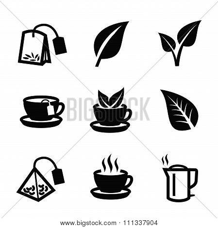 Leaf nature tea vector