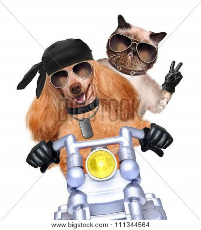 Motorbike couple cat and dog at speed.