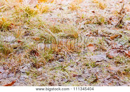 Hoarfrost In The Winter