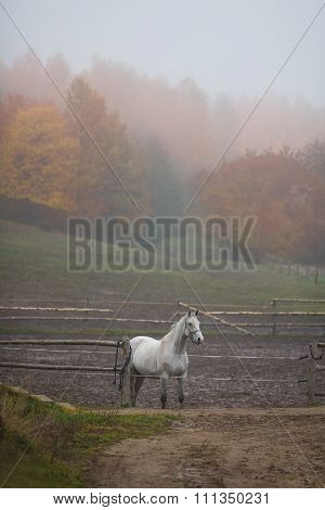 White Horse In A Stable Outdoor