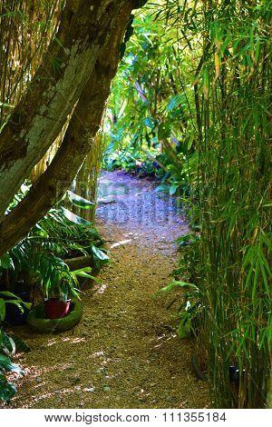 Path Thru Bamboo