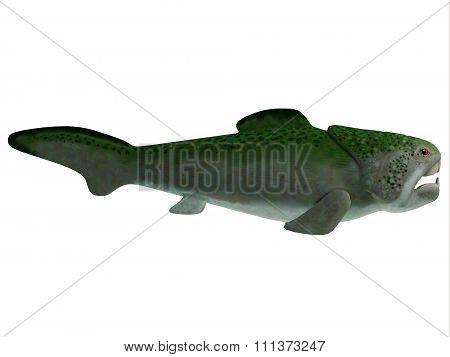 Devonian Dunkleosteus Fish