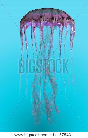 Pelagia Noctiluca Jellyfish