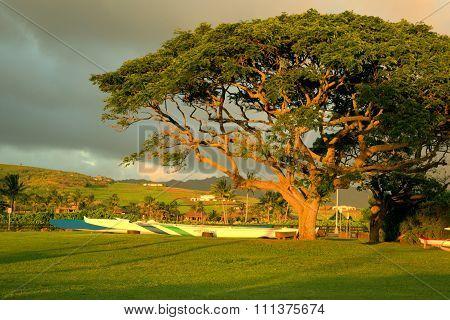 Kayaks under a Monkey pod tree